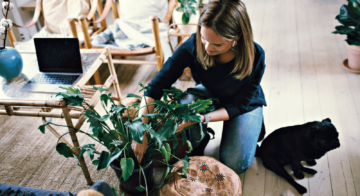 5 houseplants to help keep your house cool during summer