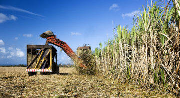 Advantages & Disadvantages of bioenergy