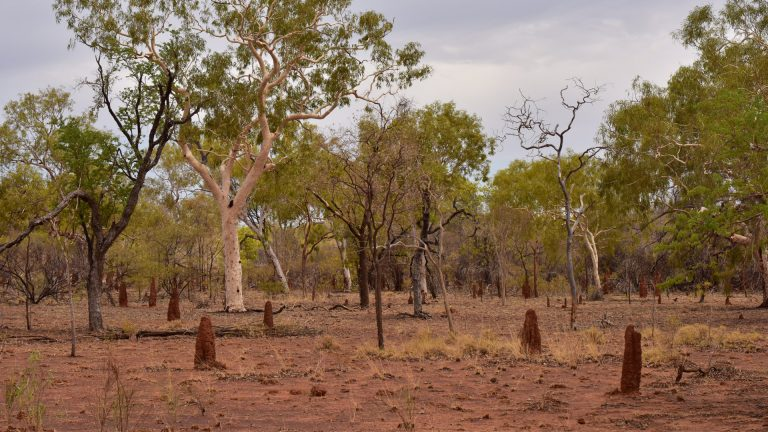 Trees, bushes and ant mounds in Beetoota basin